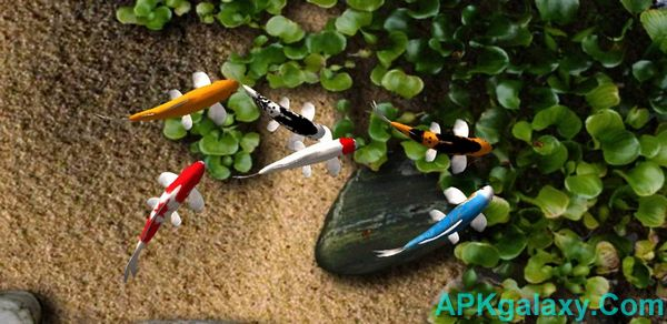 Koi Live Wallpaper V19 Apk Apkgalaxy
