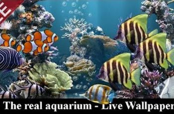 The real aquarium – Live Wallpaper Apk