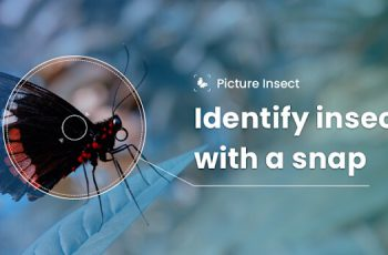 Picture Insect – Bug Identifier Apk